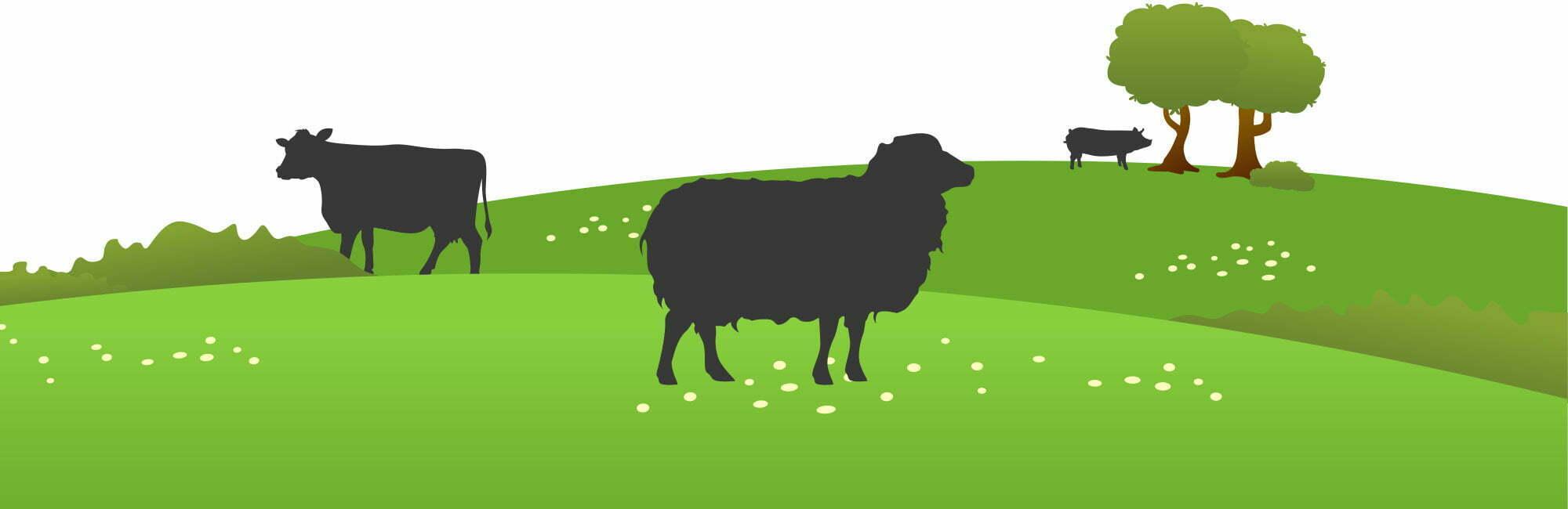 La ferme d'Ambias élève des élevages de brebis, de vaches et de cochons en Aveyron